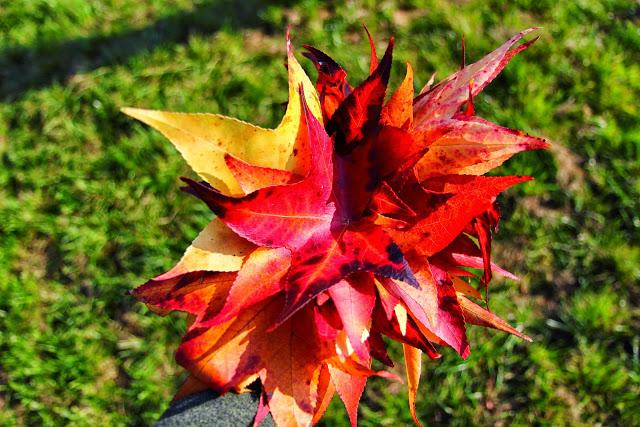 Torino Parco della Pellerina: Mazzo di foglie rosse e gialle autunnali
